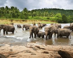 Ázijské slony